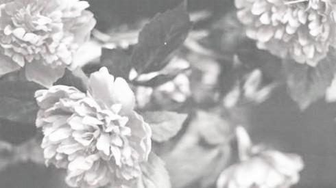 flowers5-2